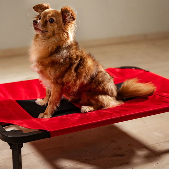 Lucky Dog® Comfort Cot