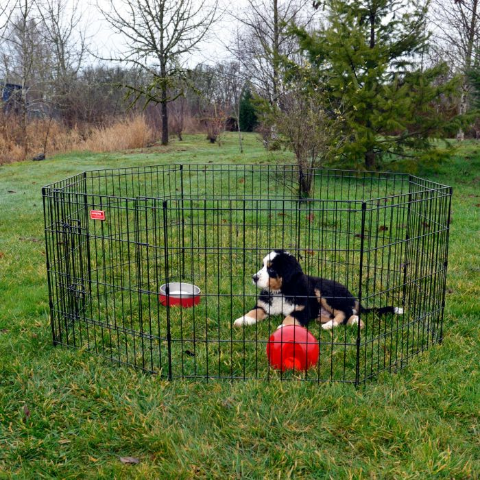 Lucky Dog® Pet Play and Exercise Pen