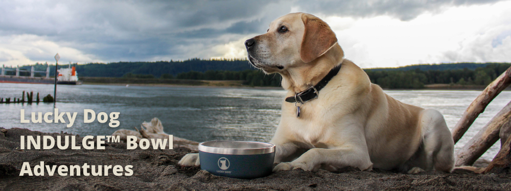 LUCKY DOG INDULGE™ 5 STAINLESS STEEL DOG BOWL